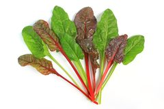 Chard. Young chard leaves (Beta vulgaris subsp. vulgaris) isolated in front of white background Royalty Free Stock Photo