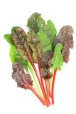 Chard Royalty Free Stock Photography