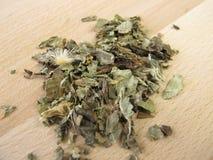 Chardon de Mary, herba de mariae de Cardui Photographie stock libre de droits