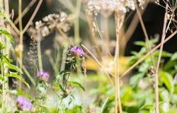 Chardon et mauvaises herbes Photo stock