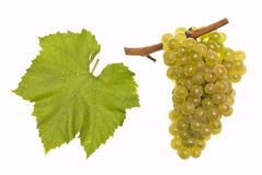 Chardonnay Stock Images