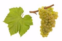 Chardonnay immagini stock