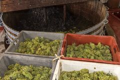 Chardonnay e imprensa de vinho de Pinot Noir Imagem de Stock