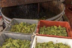 Chardonnay e imprensa de vinho de Pinot Noir Fotos de Stock