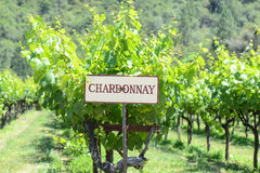 Chardonnay Grapes Sign Stock Images
