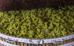 Chardonnay na imprensa de vinho de fechamento Imagem de Stock