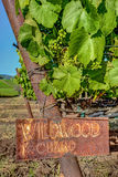 Rustic Chardonnay Signpost and Young Grapes. Weathered Sign Identifies Young Chardonnay Grapes as they Soak Up the Sunshine in Napa, California Stock Photos
