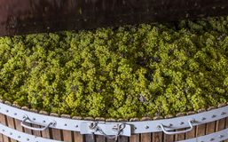 Chardonnay in torchio di chiusura Immagine Stock