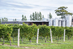 Chardonnay Vines and Fermenting Tanks in a Winery Stock Photos