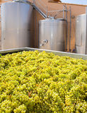 Chardonnay winemaking with grapes and tanks Stock Image