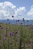 Chardons contre les montagnes d'Uinta, Utah Photos libres de droits