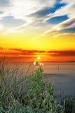 Chardons grands sur le coucher du soleil atlantique sauvage de manière Photo libre de droits