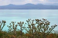 Chardons sur le lac Sevan, Arménie Images libres de droits