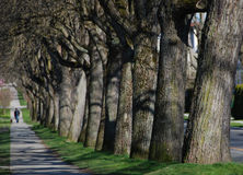 Charecter in trees-avenue. Blurry charecter walking in trees-avenue royalty free stock photography