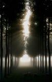 Charente September mist Royaltyfria Bilder