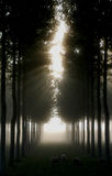 Charente September Mist Royalty Free Stock Images