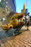 Charging Bull Royalty Free Stock Photo