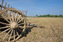 Chariot à la rizière. Images libres de droits