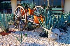 Chariot avec des usines d'agave Photos libres de droits