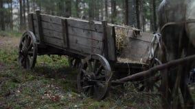 Chariot avec le cheval dans la forêt clips vidéos