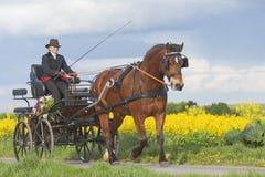 Chariot d'équitation de femme photos stock