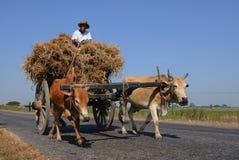 Chariot de boeuf 02 Photo stock