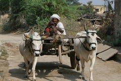 Chariot de boeuf, Inde Photos stock
