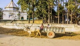 Chariot de Bullock image stock