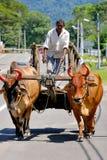 Chariot de Bullock ou chariot de boeuf photos stock