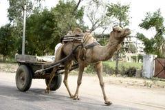 Chariot de chameau à Jaipur, Inde image libre de droits