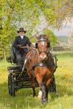 Chariot de cheval de femme photographie stock