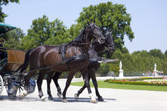 Chariot de chevaux Image libre de droits