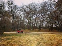 Chariot de golf dans les bois Images stock