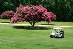 Chariot de golf par le Crepe Myrtle Photos libres de droits