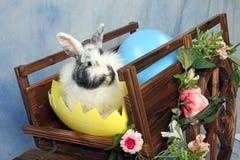 Chariot de lapin de Pâques Photos stock