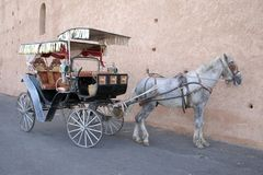 Chariot de Meknes hackney Photos stock