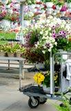 Chariot des fleurs à une pépinière locale d'usine Photos libres de droits