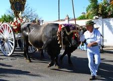 Chariot espagnol de berger et de taureau, Marbella Photographie stock