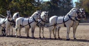 Chariot et blanc six Photo stock