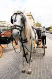 Chariot et cheval, Espagne Photographie stock libre de droits