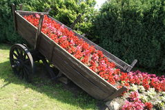 Chariot with flowers. Old wood cart with flowers Royalty Free Stock Photos
