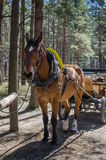 Chariot hippomobile Photographie stock