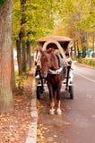 Chariot hippomobile de Brown dans l'allée d'automne Image stock