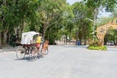 Chariot hippomobile de cru conduisant par le parc dans l'arrangement vert de forêt photos stock