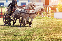 Chariot race with obstacles Royalty Free Stock Images