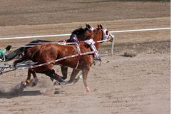 Chariot racing Royalty Free Stock Images
