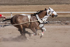 Chariot racing Stock Photography