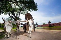 Chariots Photographie stock libre de droits