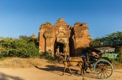 Chariots de Hourse avec le temple de Dhammayangyi le plus grand temple Photographie stock