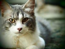 Charismatische Katze Stockbild